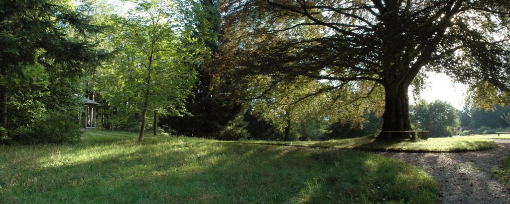 d70_wittekopf_altenburg_park-mit-buche